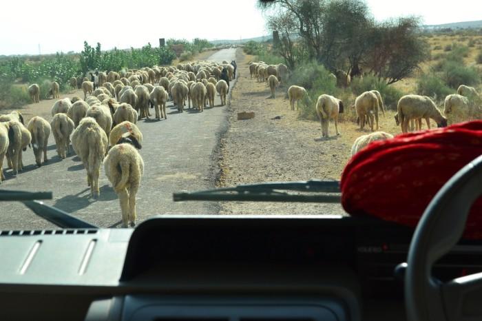 aventura en el desierto del Thar