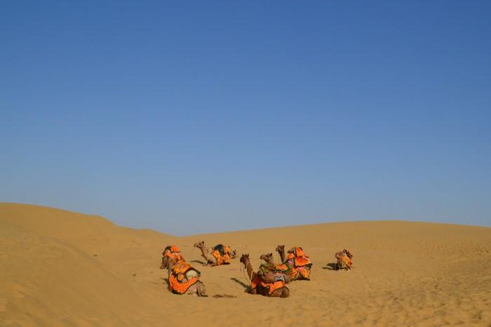 camellos en el desierto del Thar