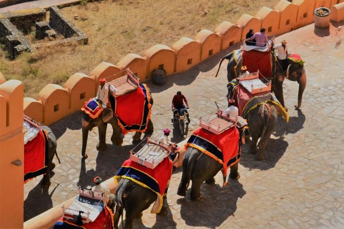 Elefantes llegando al fuerte Amber