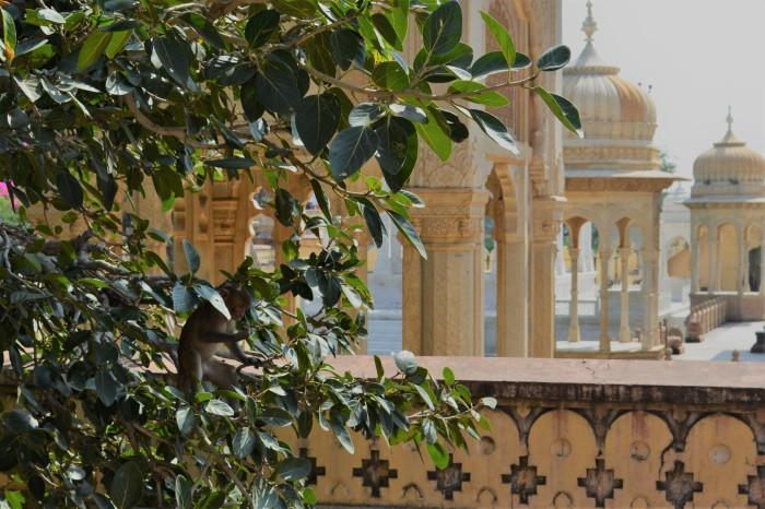 cenotafio Jaipur india