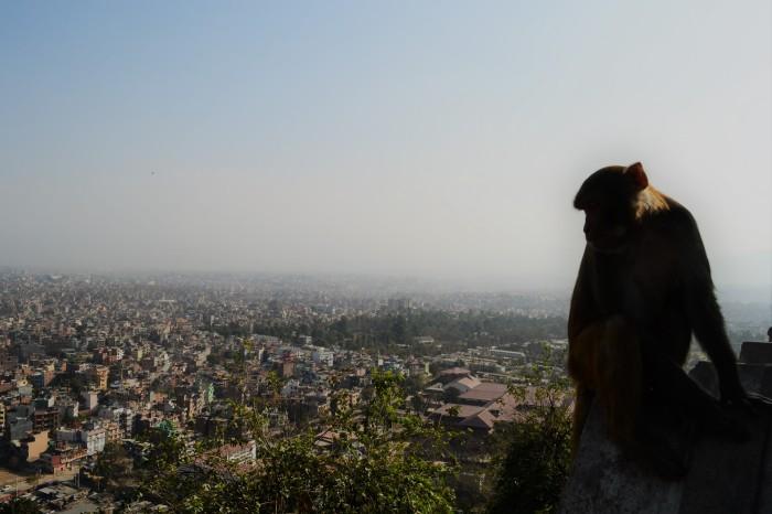 templo de los monos katmandú