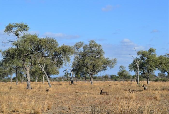 Ciervos en la reserva natural