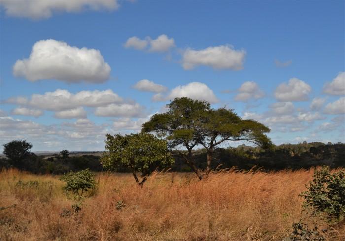 La África del Rey León