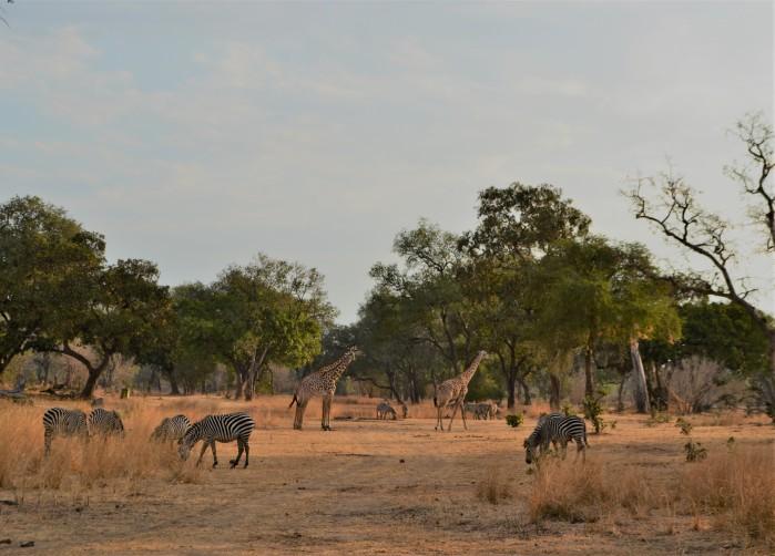 Mejor Safari de Zambia
