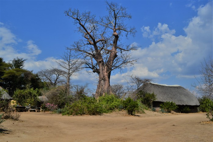 Baobab Liwonde Safari Camp