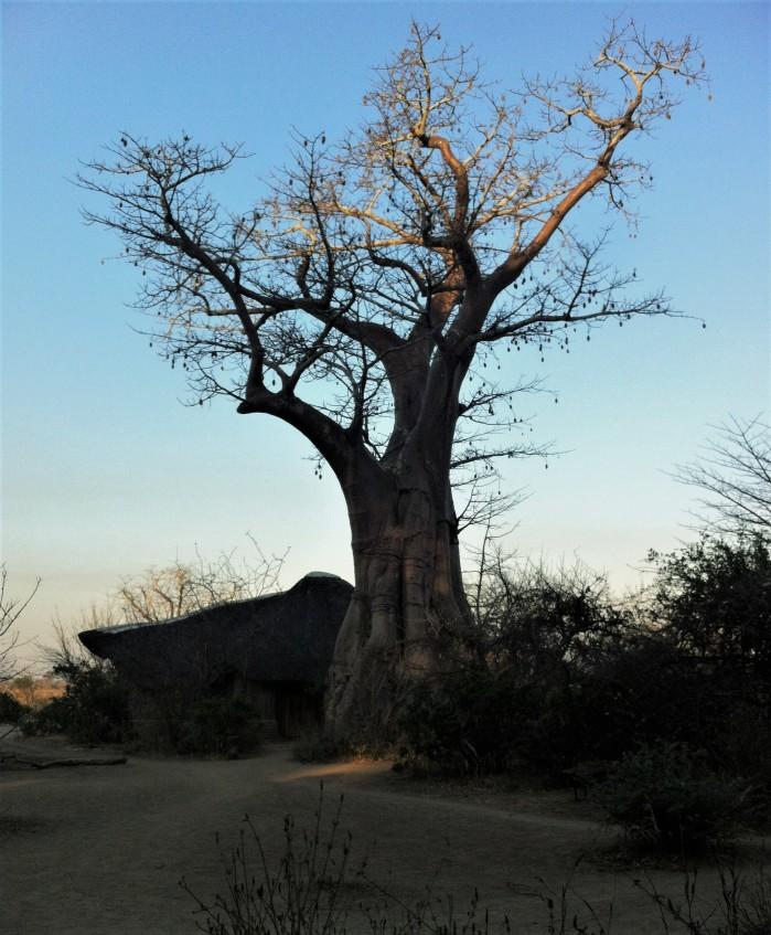 Baobab Malawi Lodge