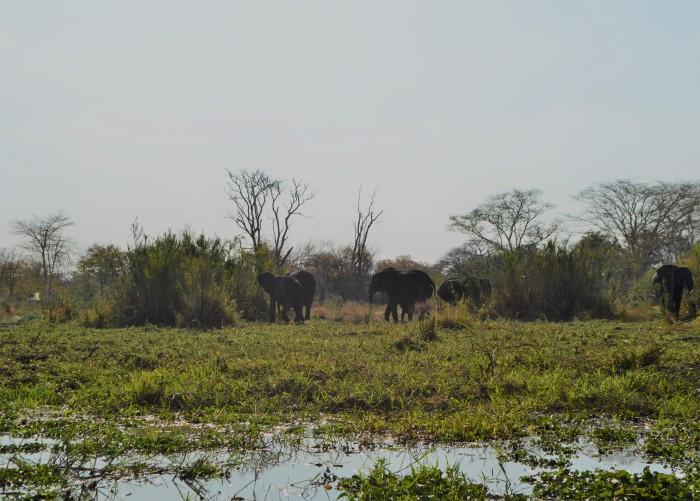 Mejor Safari de Malawi