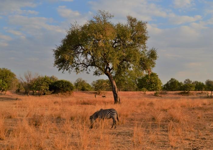 Safari en South Luangwa