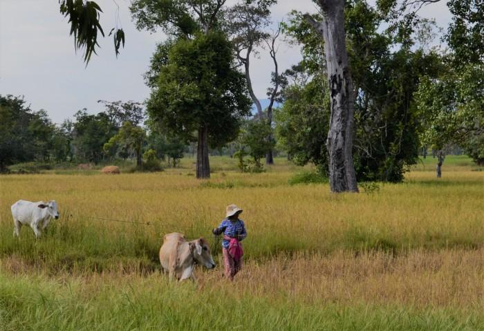 Paisaje rural Camboya