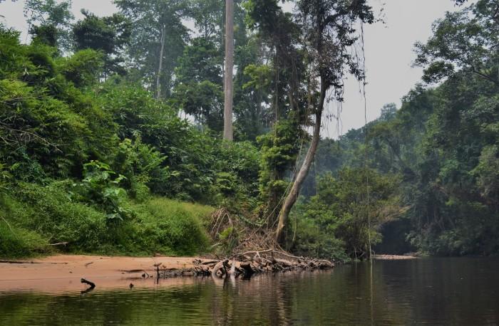 Selva Taman Negara