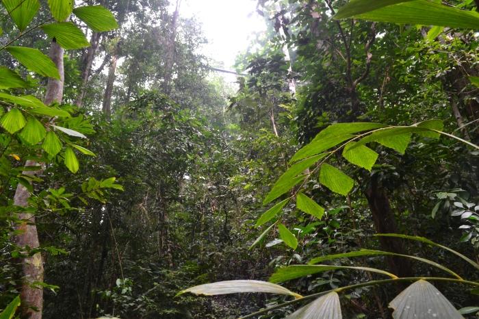 Vista del canopy walk