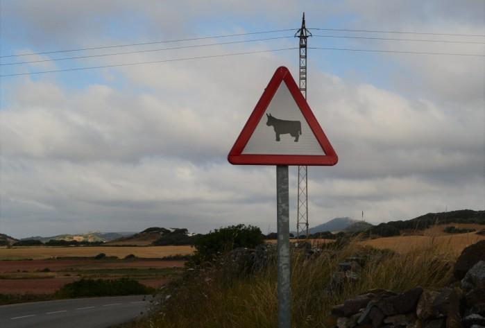 Vacas Menorca