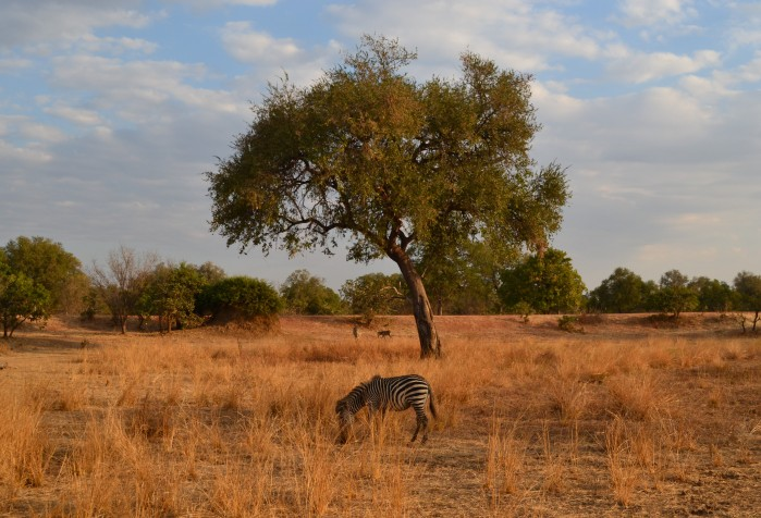 Safari Africa Zambia