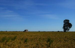 Delta Ebro arroz
